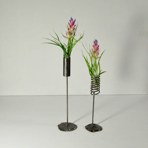 stricta flowering air plants metal stand displays