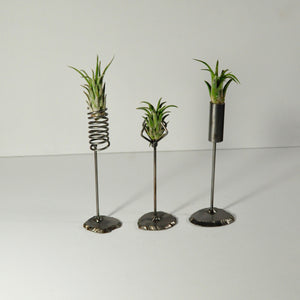 air plants tillandsia rubra metal display stand