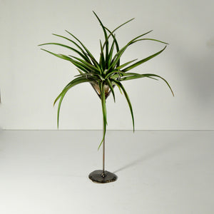 air plant tillandsia metal stand display holder