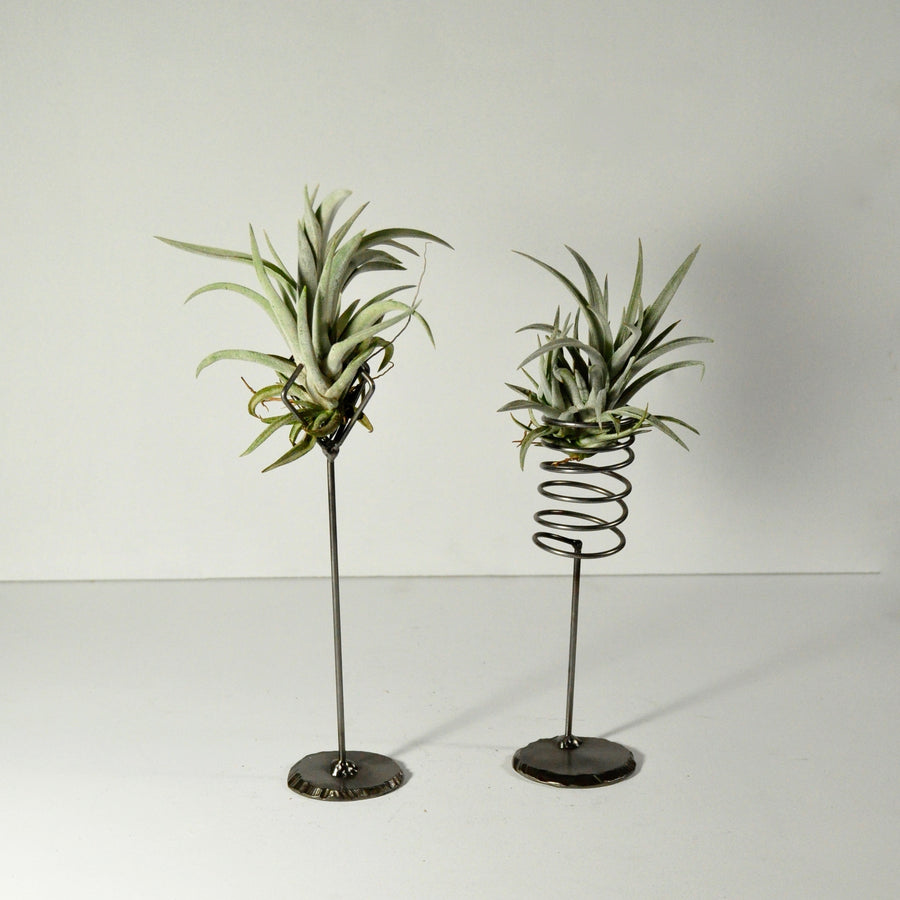 air plants harrisii metal stands displays