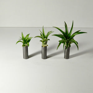 metal air plant display table top tillandsia