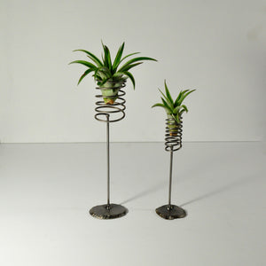 air plants brachycaulos metal stand display