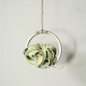 hanging air plant holder with air plant steel circle xerographica