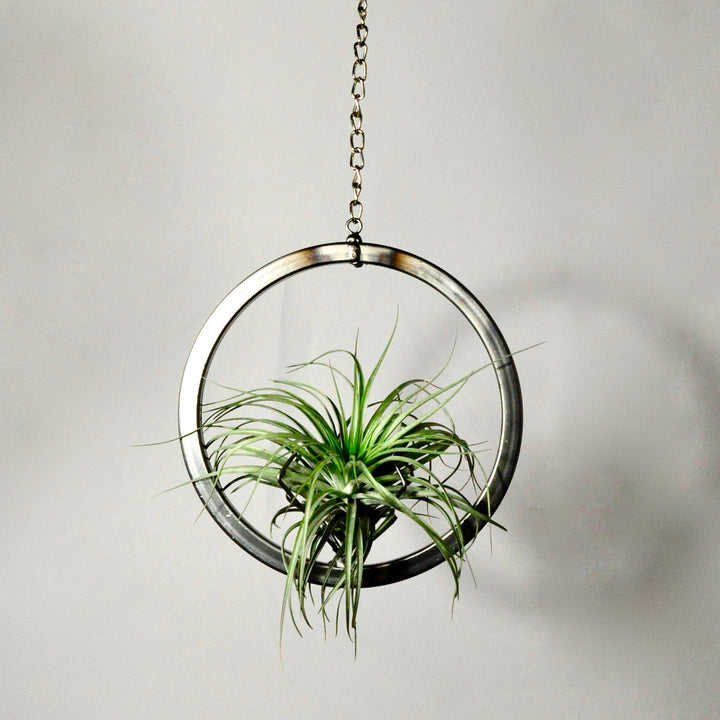 hanging metal air plant holder circle on chain