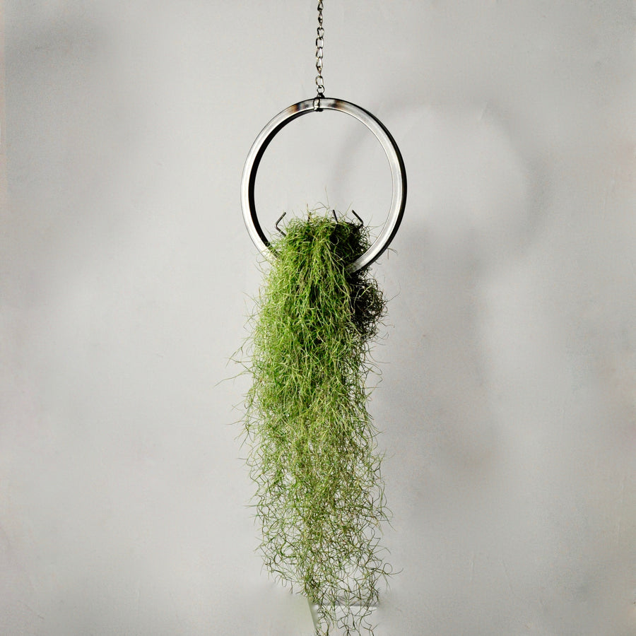 hanging air plant holder metal ring with moss