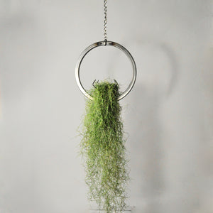 hanging air plant holder steel ring with moss