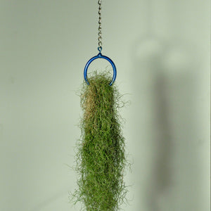 Usneoides fine green moss air plant hanging metal plant holder