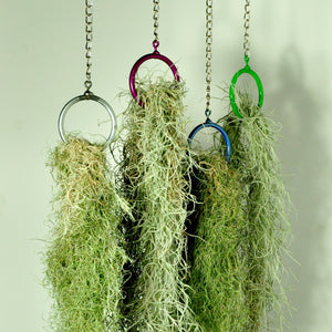 Usneoides fine green moss air plant hanging plant holders