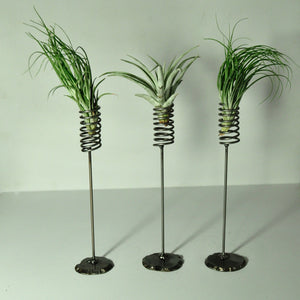 air plant stands air plant holder small spring design to hold indoor plants