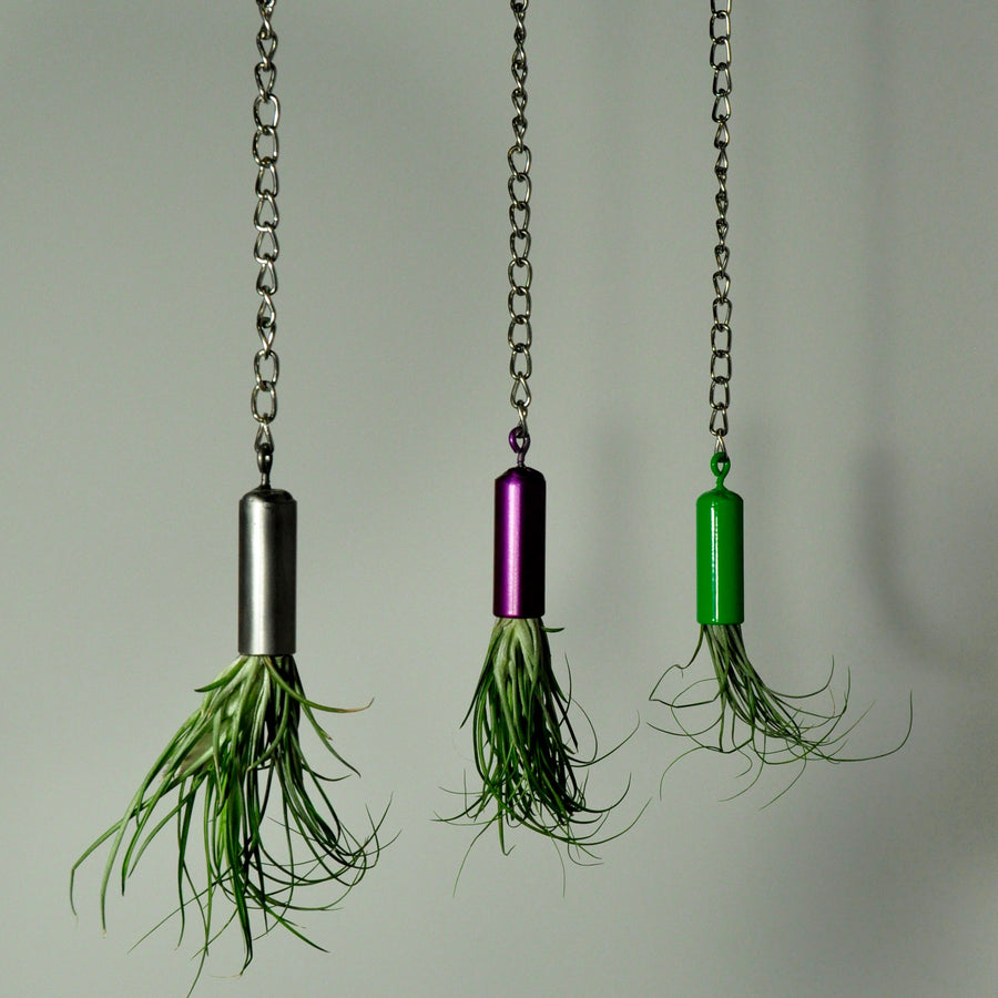 hanging metal air plant holder displays purple green steel with tillandsia