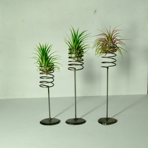air plant stand large metal spring design for tillandsia display plant holders