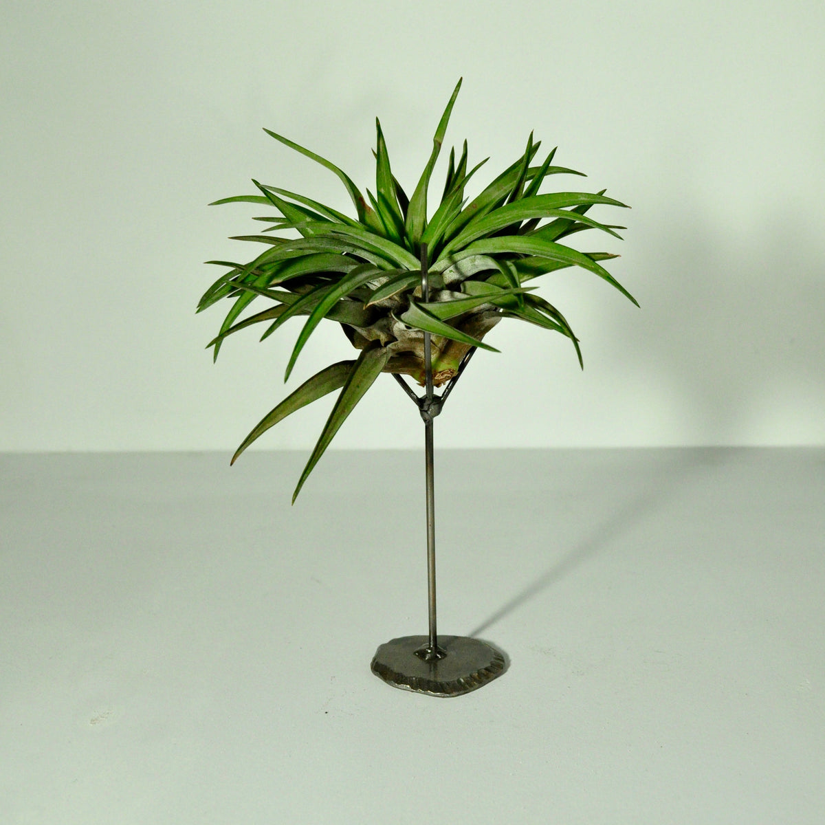 Air plant holder large metal claw stand welder girl