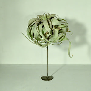 air plant holder with tillandsia plant metal display