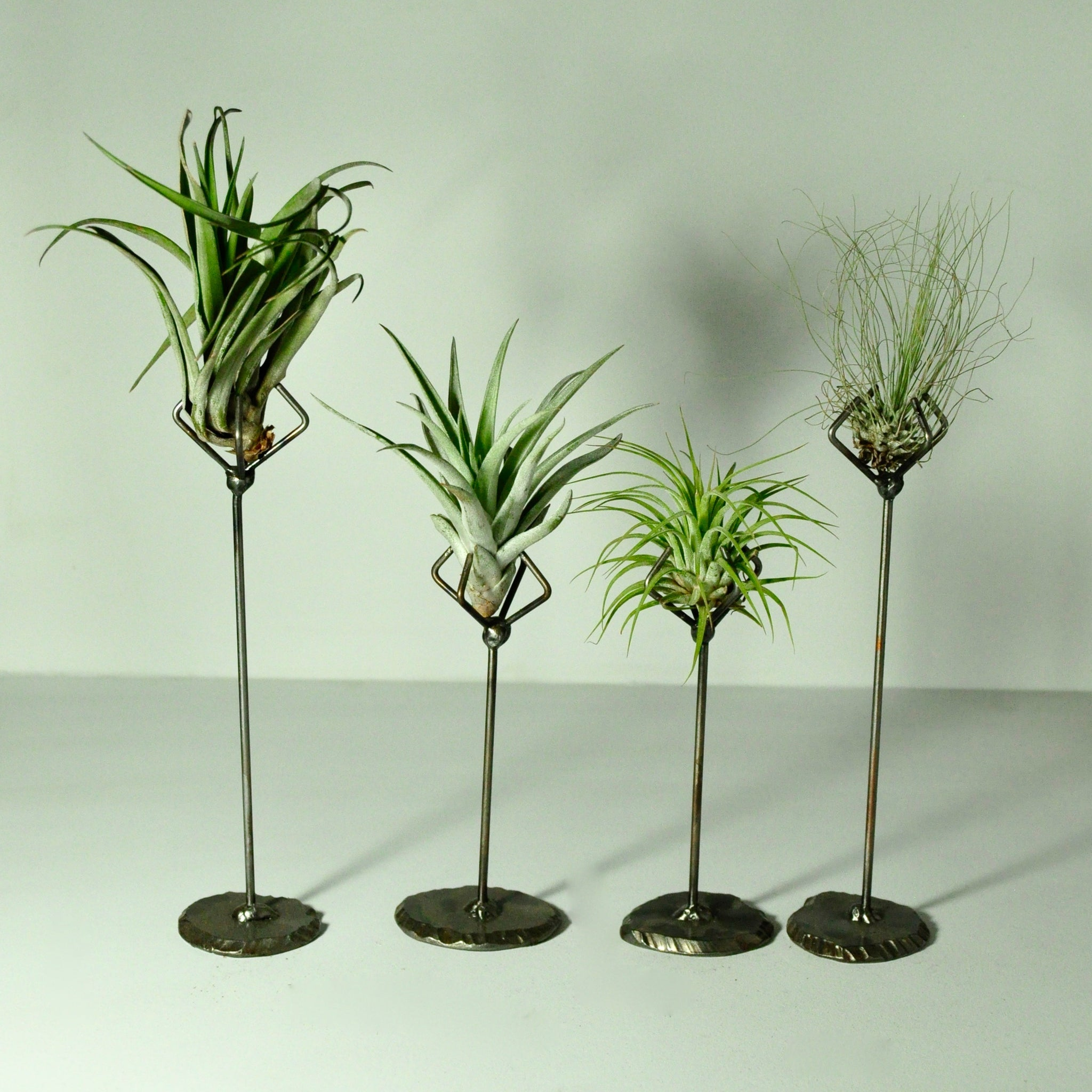 Air plant holder metal stand for air plants welder girl