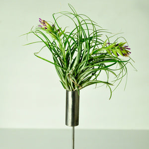 air plant stand metal holder for indoor plants tillandsia display