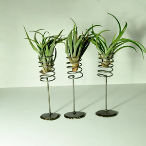 air plant holder metal plant display for tillandsia large spring