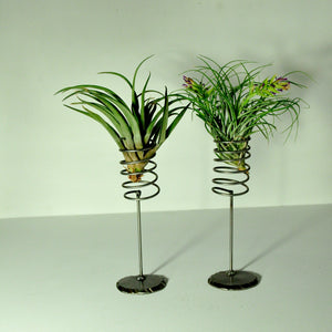 air plant stands air plant holder large spring design to hold indoor plants