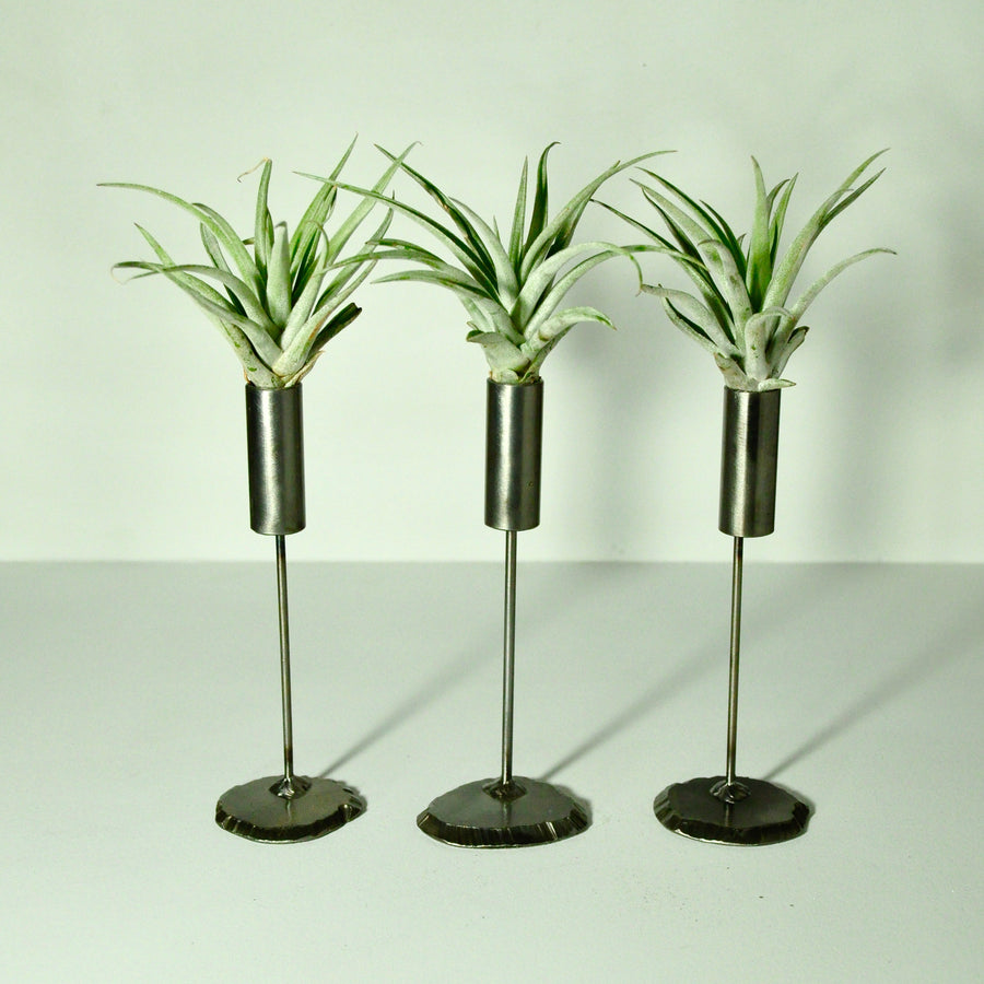 Cylinder Stand Air Plant Holder