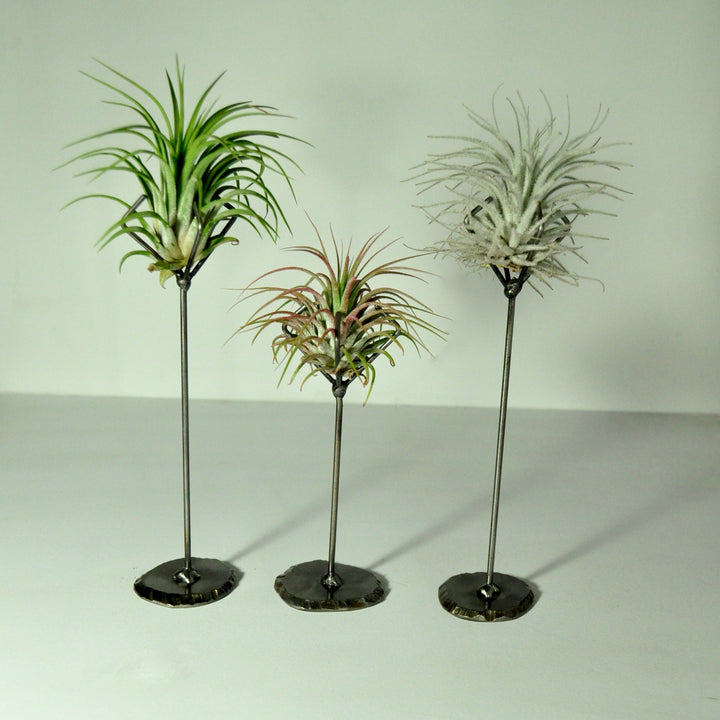 air-plant-stand-metal-holder-display