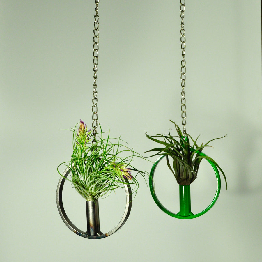 air plants stricta tillandsia hanging display metal green