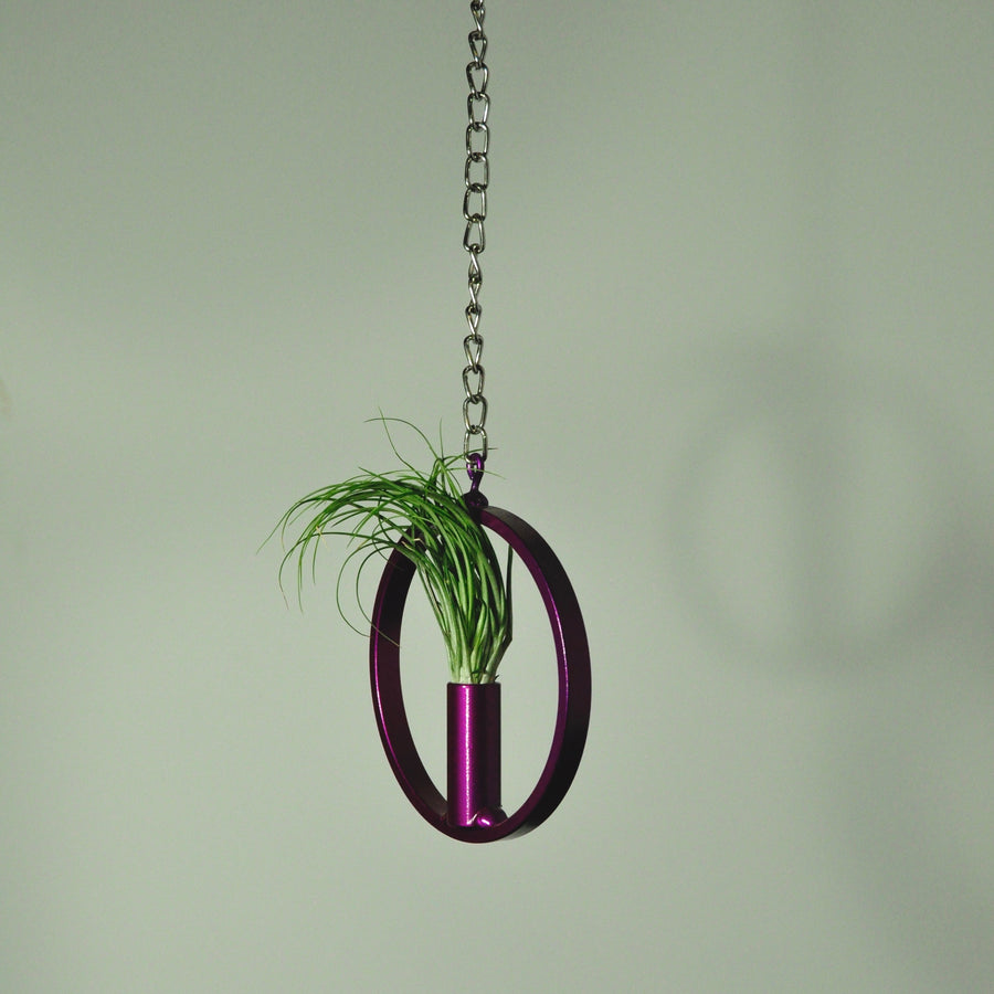 air plants stricta tillandsia hanging metal display