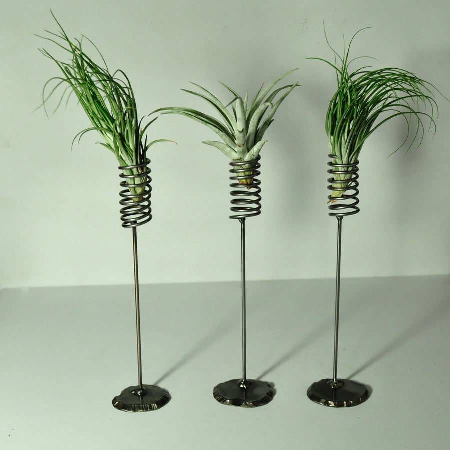 air plants stricta tillandsia metal stand display spring