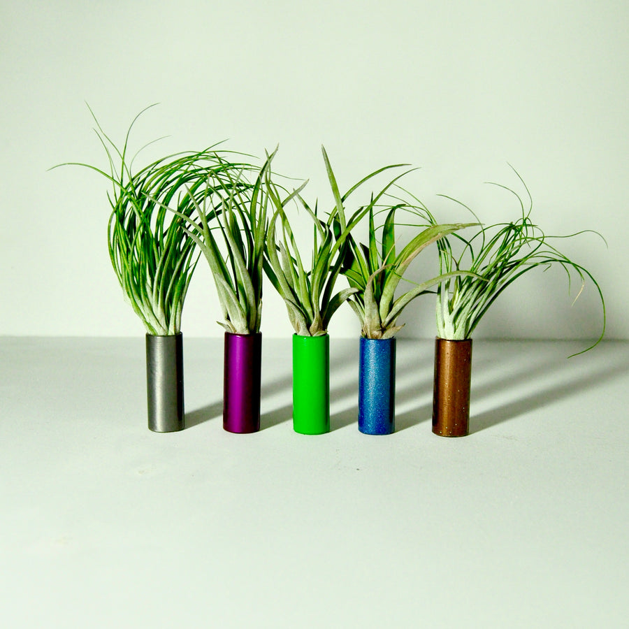 air plants stricta tillandsia metal display stand