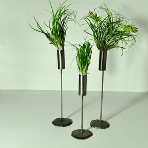 air plants stricta tillandsia metal stand display cylinder