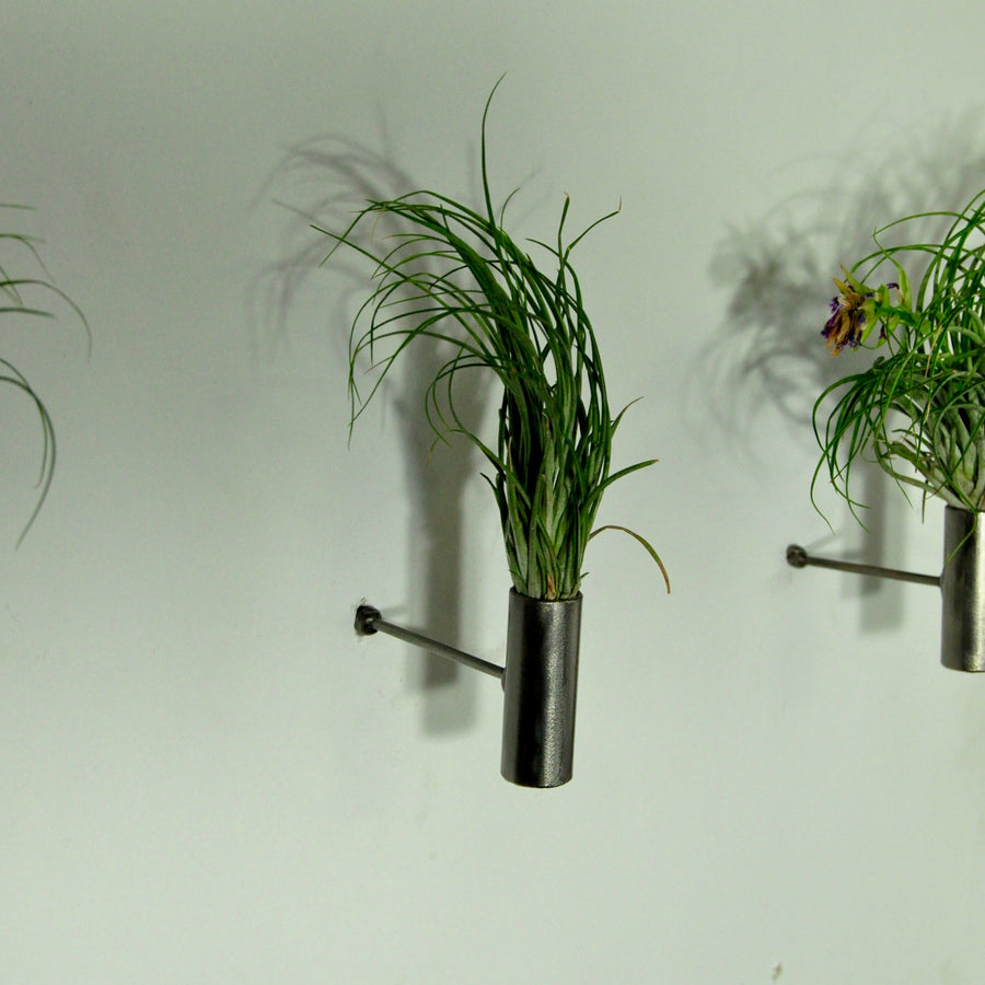 air plants stricta tillandsia wall plant holder metal display