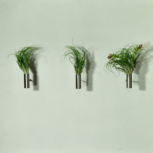 air plants stricta tillandsia wall mounted display