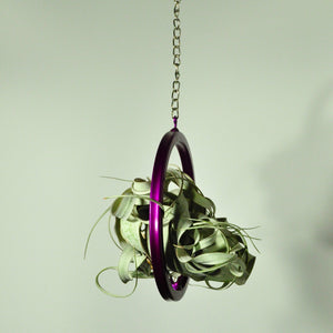 air plants tillandsia xerographica hanging metal air plant holder purple