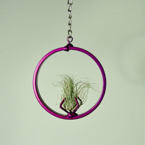 Air Plants Fuchsii tillandsia hanging metal display