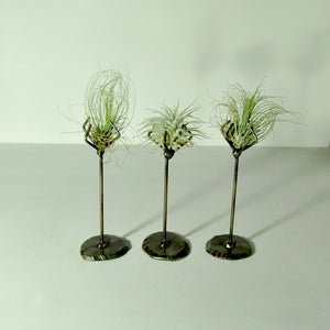 Air Plants Fuchsii tillandsia metal stand holder