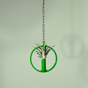 air plants tillandsia indoor plants hanging metal display