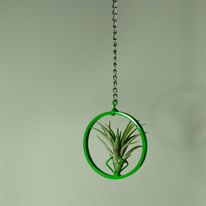 air plants tillandsia hanging air plant display green