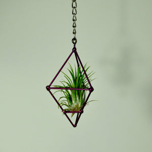 air plants house plants tillandsia hanging prism display