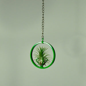 air plants house plants tillandsia hanging display green