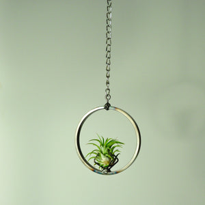 air plants house plants tillandsia hanging metal display