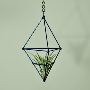 air plants tillandsia indoor plants hanging air plants prism