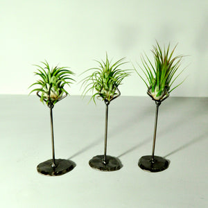 air plants house plants tillandsia metal claw stand