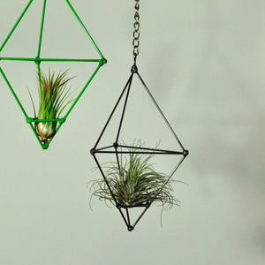 air plants oaxacana tillandsia hanging metal prism holder