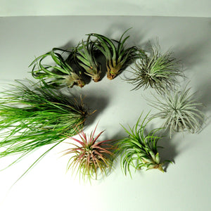 air plants for metal spring stand indoor plant displays and plant holders