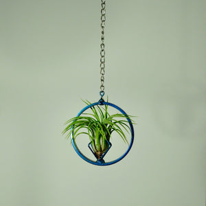 hanging air plant display holder tillandsia blue chain with plant