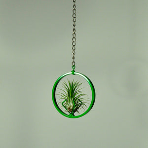 hanging air plant display indoor plant green metal