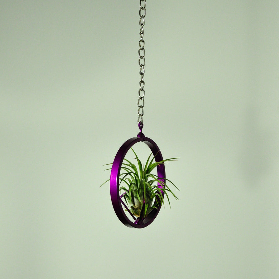 hanging air plant display holder indoor plant tillandsia