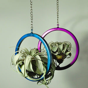 hanging air plant holder metal display large circle blue purple indoor plants