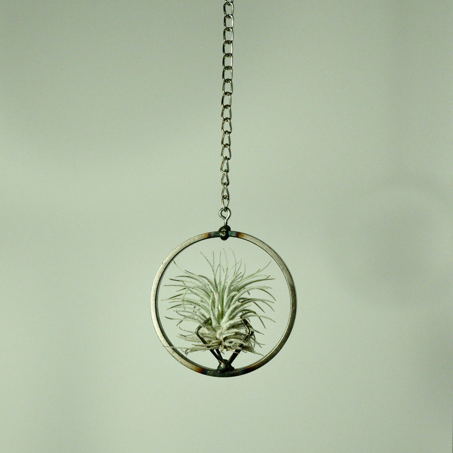 hanging air plant holder tillandsia display metal steel medium