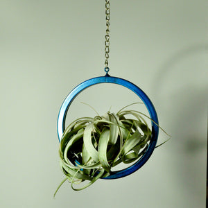 hanging air plant holder metal display large circle blue indoor plants