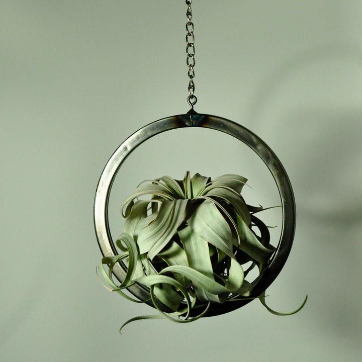 hanging air plant holder metal circle tillandsia display steel