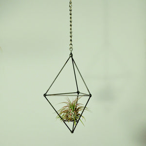 hanging air plants vertical garden metal prism tillandsia